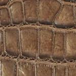 クロコダイルの本革・型押しの見分け方